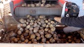 клубень : Potatoes are loading from special mechanized conveyor belt to wooden box for packaging. potatoes waiting to go to markets for sale. annual potatoes harvesting period on farm. agricultural production sector.