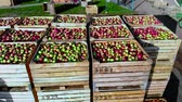houten krat : aero top view. wooden containers, boxes filled to the top with ripe red and green delicious apples, during annual harvesting period in apple orchard. fresh picked apple harvest on farm
