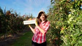 orchard : in the suns rays, female farmer in plaid shirt and hat walks between the rows of apple trees. she holds box with fresh juicy, selective apples. red apple harvest in the garden, on the farm.