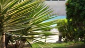 vertical growth : Close-up, palm leaves on a hot summer day. Stock Footage