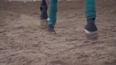 zaprášený : horse training. close-up, hooves, legs of a horse running along the sand. the horses front legs are tied with a special bandage tape Dostupné videozáznamy