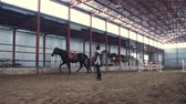 dressage : In a special hangar, a woman coach trains a black, thoroughbred horse. he jumps, runs in a circle, around. horse training Stock Footage