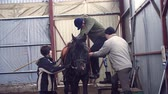 hipopótamo : in special hangar, a young disabled man, with artificial limb learns to ride a horse with close supervision teachers, they help him to mount his horse. hippotherapy. rehabilitation of disabled with animals.