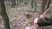 soğanlı : hand holding red fencing tape. Blooming snowdrops in spring forest, a protected area, fenced with a red ribbon. Snowdrops are rare flowers recorded in the Red Book, are protected by law.
