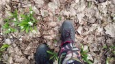 тычинка : close-up, view from above, in the spring forest, among snowdrops, walking male legs in boots, Snowdrops are rare flowers recorded in the Red Book, are protected by law. early spring