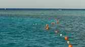 people snorkeling in the sea, swimming, gazing at fish along the coral reef. summer vacation by the sea Wideo
