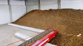 nature resources : Potatoes move on special conveyor machinery belt and fit into a storage room, a warehouse for winter storage. potato harvesting, crop