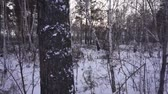 Winter forest. Motion camera. Syberia