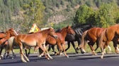 vaquera : Horses run across. Summer. Herd.