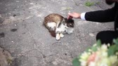 кошка : Man stroking the cat Стоковые видеозаписи