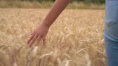 Slow motion video clip of young adult woman or teenage female girls hand feeling the top of a field of golden barley, corn or wheat crop