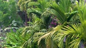 Tropical rain, rainstorm or thunderstorm raining in a green jungle environment with palm trees Stock mozgókép