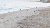 ватт : dog beach sand sea gulls