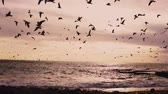 aves marinhas : a flock of seabirds gulls and Ocean Beach with the wind