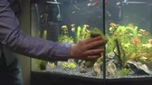 クリーンアップ : Male hand cleaning aquarium using microfiber towel.