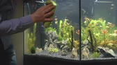 entretien ménager : Male hand cleaning aquarium using microfiber towel.
