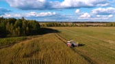mais : Harvesting corn from a birds eye view. Harvester and KAMAZ pick corn in a field in autumn. Stockvideo