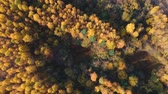 conífero : Aerial view: Flying over an autumn forest with pines, orange birches and green firs. Nature, travel, recreation.Russia-Europe.Top view of the forest. Vídeos