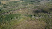 after fire : Burned ten years ago, the forest with a birds eye view, still has not recovered after a long time