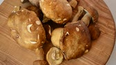 cantharellus : Boletus edulis and Cantharellus. Mushrooms. Shooting of forest mushrooms. Stock Footage