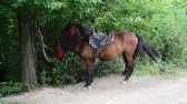 pet : Horses in the wood
