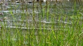 riverbank : Grass against the mountain river