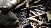 backyard : Ashes and coals from a fire Stock Footage