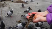 courageous : Spain. Birds on the streets of Madrid, pigeons and sparrows. Slow motion. People feed birds from hands.
