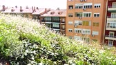 window gardening : Walking path in the square. Madrid. Spain. Shooting in motion.