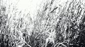 herbívoro : high grass