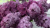 window gardening : Spring lilac, bouquet in a vase