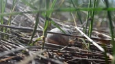 osamělost : Snail in the garden on the grass. Shooting of a snail