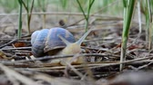 slither : Shooting of a snail. Snail in the garden