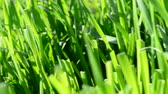 backyard : Grass in the spring
