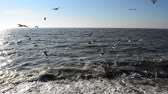 wind : Sea and seagulls Stock Footage