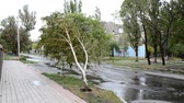 assassino : The hurricane bends a birch. The camera is in a hurricane zone. Vídeos