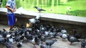 patinho : The boy feeds pigeons in the park near the lake. Slow motion.