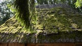 grown : Roof moss-grown. The village in the wood.