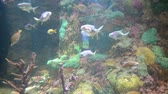 tropical climate : Fishes in an aquarium.