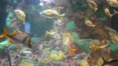 temas animais : Fishes in an aquarium. Colorful background