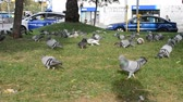 papagaio : Parrot and pigeons in Barcelona, ??Spain