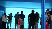 whale : ORLANDO, USA - MARCH 25, 2014: People through glass observe whales. SeaWorld is a parks of mammals, oceanariums and animals. Commersons Dolphin (Cephalorhynchus commersonii).