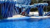 temas animais : ORLANDO, USA - MARCH 25, 2014: Show with participation of people, dolphins, effects from water.