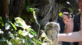 tawny : ORLANDO, USA - MARCH 25, 2014: Ridiculous owlet. Tawny Frogmouth (Podargus strigoides).