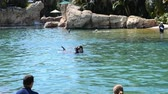 tursiops : ORLANDO, USA - MARCH 25, 2014: Bathing with dolphins in the artificial lake. Discovery Cove, Orlando, USA. People study dolphins in a reservoir and float with them.