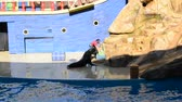 descontraído : ORLANDO, USA - MARCH 25, 2014: SeaWorld is a parks of mammals, ocean parks and parks. California Sea Lion (Zalophus californianus). Stock Footage