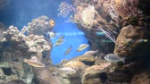 esponja : country Spain - Barcelona Aquarium Stock Footage
