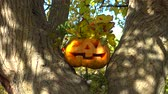 悪夢 : Spooky halloween pumpkin. Shooting on a tree in the wood.