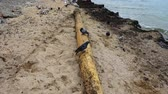 shipwreck : Storm has thrown out on the sandy seashore. Mast from the ancient sunk ship.