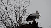 özveri : Stork in a nest.